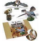 Birds of Prey Card Model - Pack of 3