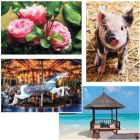 TheraJigsaw Foam Puzzle Set of 4: Pig, Carousel, Flower and Beach Scene.